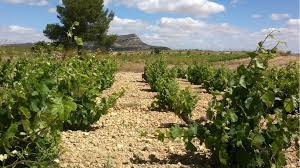 vinos de yecla la tragoneria